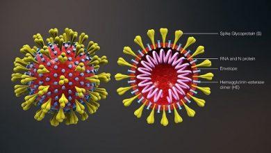 Coronavirus Diseases 2020 Update