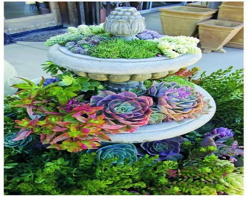 Add Some Colorful Succulents