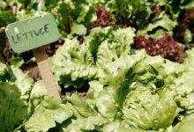 Best Ideas To Start And Maintain A Kitchen Garden