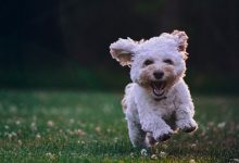 How To Choose The Dog Breed