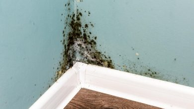 mold on your wall,mold growing on your walls
