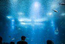 best underwater fishing lights,underwater fish lights