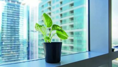 How to do Indoor Air Quality Testing