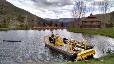 The Impacts of Harmful Algae in a Lake
