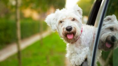 6 Reasons You Should Consider Licensing Your Pet